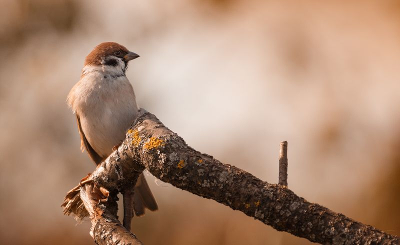 природа, лес, животные, птицы Командирphoto preview