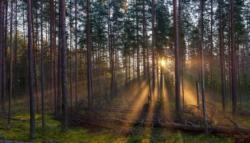 ленинградская область, ленобласть, природный заказник, шалово-перечицкий заказник \