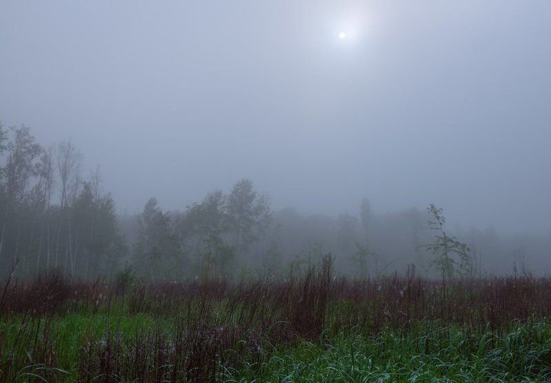 луг весна май рассвет туман травы роса Туман холодный лижет травыphoto preview
