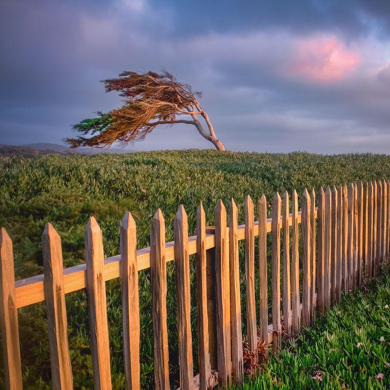 дерево, ветер, забор, закат, 17 mile drive, калифорния *Пойманный ветер*photo preview