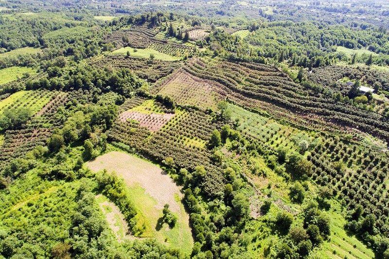 Кавказ, Абхазия, лето, сады, предгорья, дрон, #aerial, #air Абхазские сады на террасахphoto preview