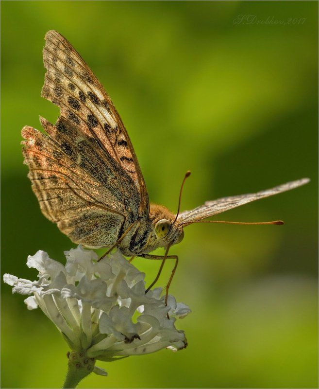 бабочка, осень, макро, зелёный Ветерphoto preview
