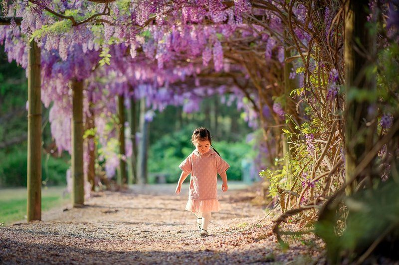 wisteria...photo preview
