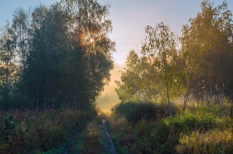 лето, луг, рассвет, туман, солнце Эти медовые летние рассветыphoto preview