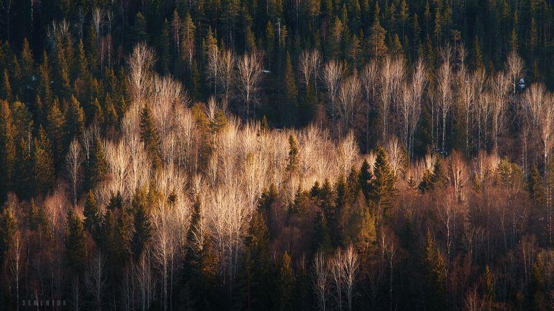 карелия, лес, весна, закат, ели, деревья. О карельских лесах.photo preview