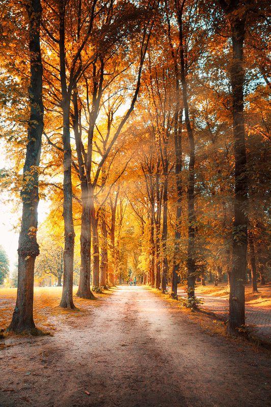 бабье лето, осень, деревья, листья, пара, свет, лучи, *Бабье лето*photo preview