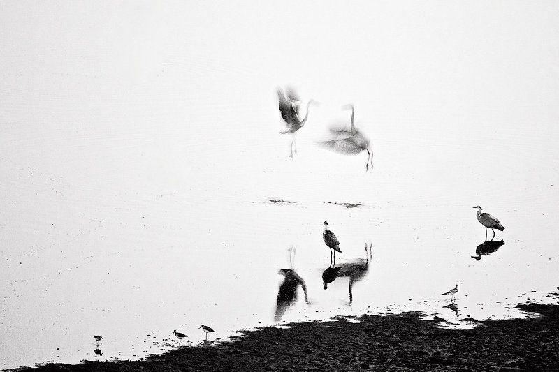 серые цапли, ночь, сюррбалетphoto preview