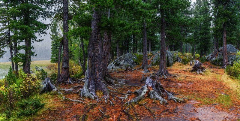 природа, пейзаж, алтай, горы, осень, мульта, панорама, снег, сибирь, лес *****photo preview