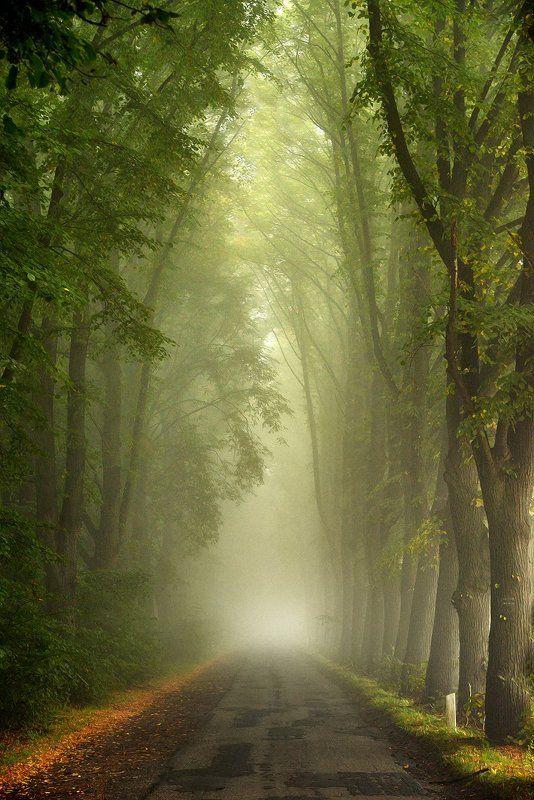тоннель tunnel road path autumn magic mist foggy road trees тоннельphoto preview