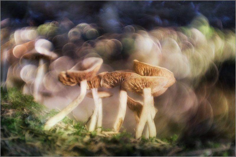 Время грибовphoto preview