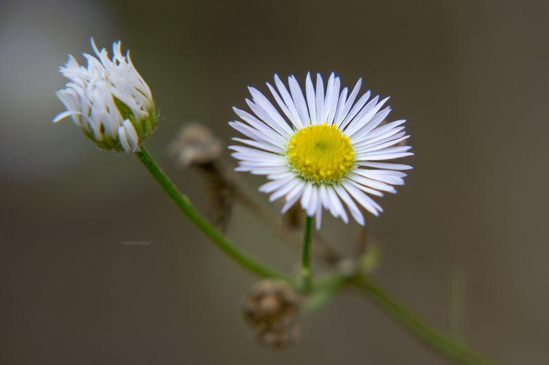 цветы, фон, осень ******photo preview