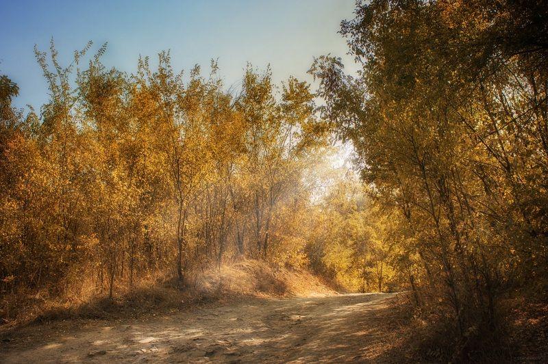 дорога, лес, осень ******photo preview