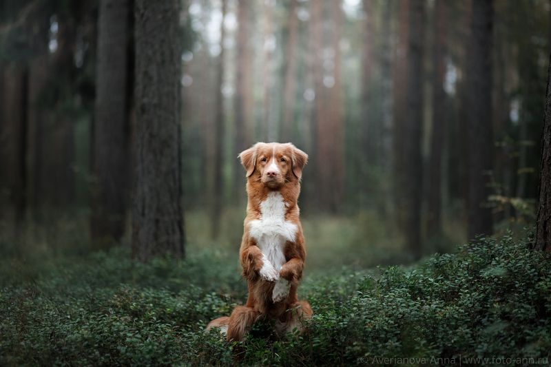 собака, природа, лес зайка =)photo preview