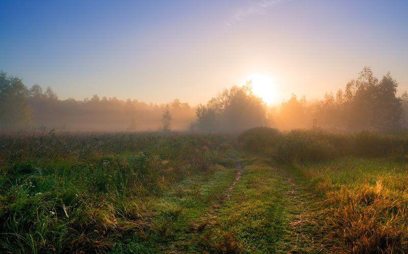 луг лето рассвет туман солнце травы дорога Манящий рассветphoto preview