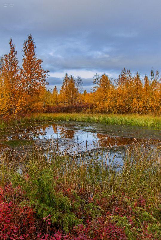 ямал , сибирь, природа, салехард , осень, ямал \