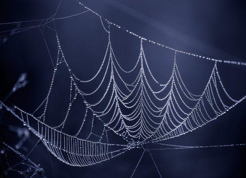 лето, сумерки, туман, паутина Приоткрыв завесу сумерекphoto preview
