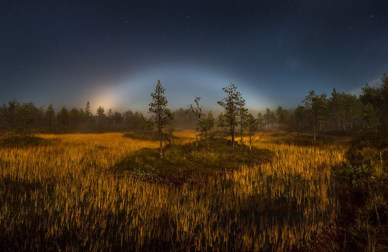 фототур, осень, ленинградская область, деревья, сосна, остров, полнолунье, луна, ночь, туман, болото, мох, радуга, лунная радуга. Лунная радуга над болотомphoto preview