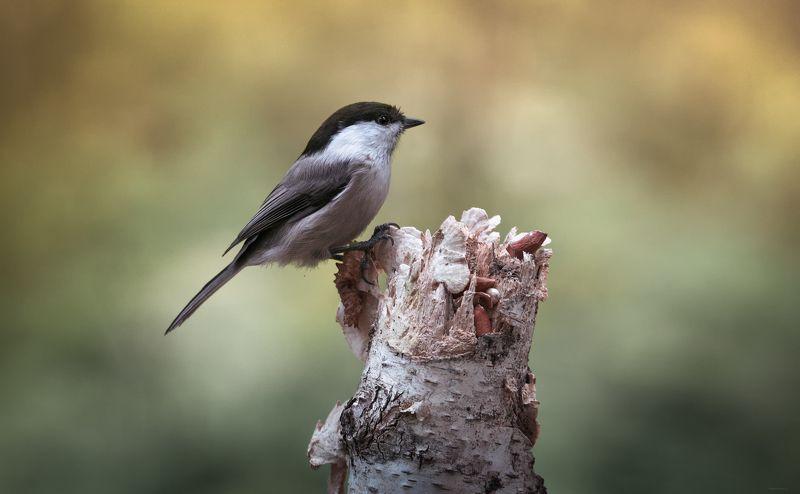 природа, лес, животные, птицы Осенние заботыphoto preview