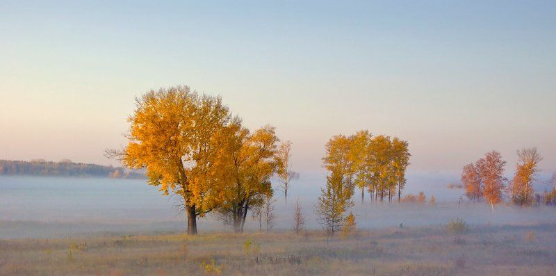 осень, туман, желтое, деревья, утро, рассвет, валерий_чичкин Туманные реки осениphoto preview