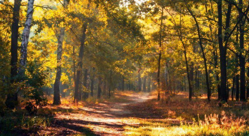 лес, осень, дубы, аллея, туман Ещё аллей не сумрачен приют(А.Фет)photo preview