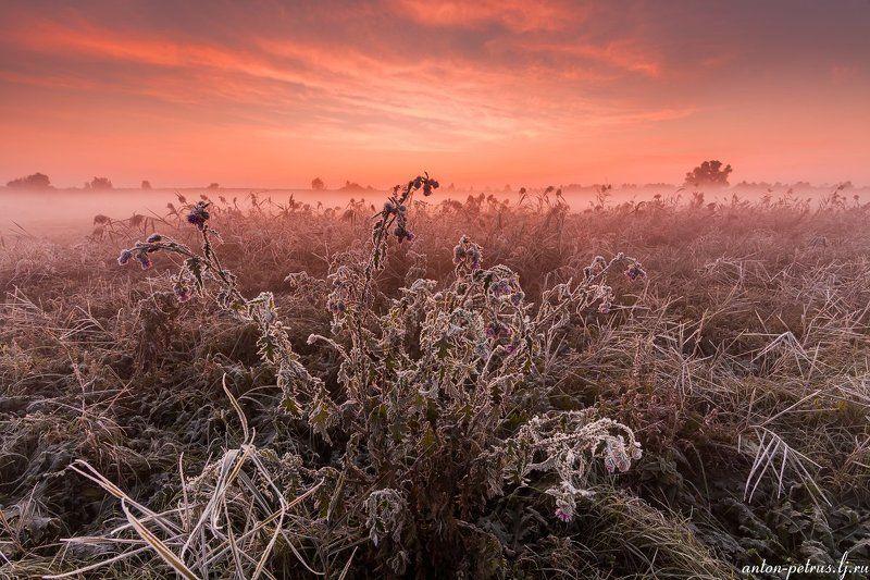 рассвет, туман, река, паутина, иней, осень Мастерская морозаphoto preview