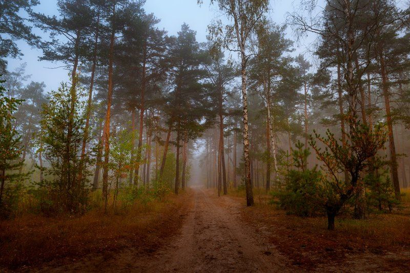 лес, осень, октябрь, тропа, туман Лесов таинственная сеньphoto preview