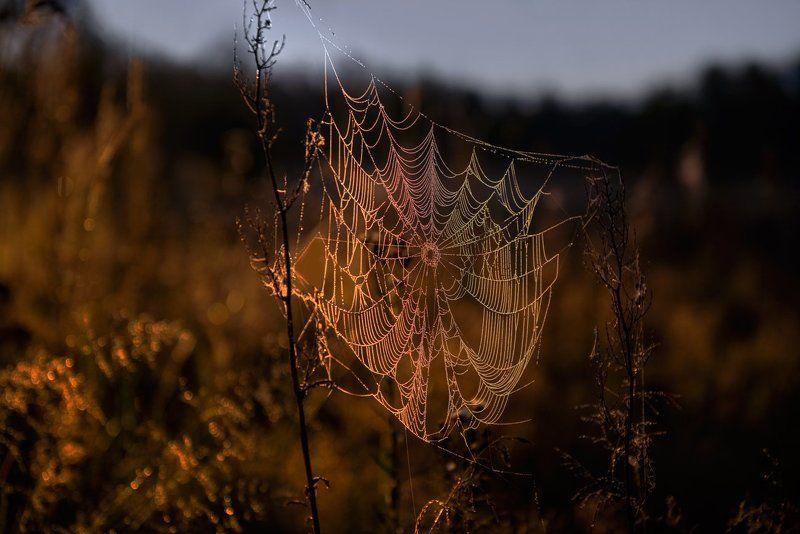 лето, паутина, рассвет, луч, сумерки Просочившись сквозь серую мглуphoto preview