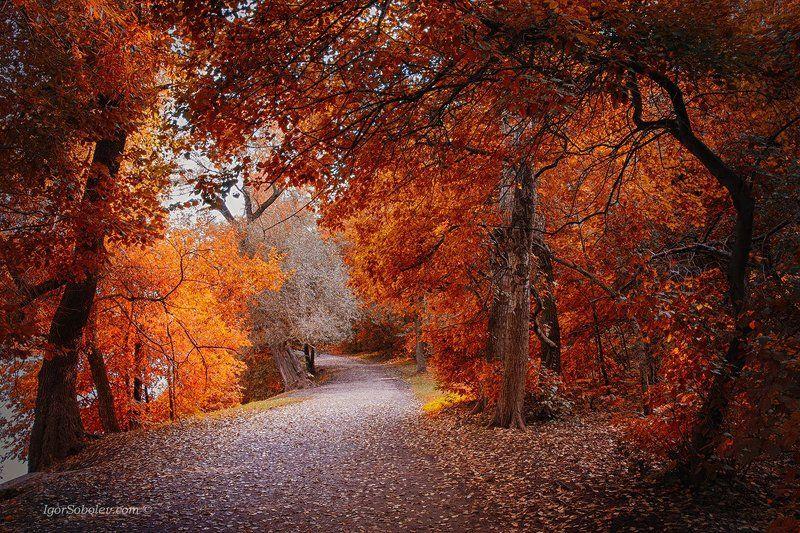 осень, парк, деревья, тропа Осеннееphoto preview