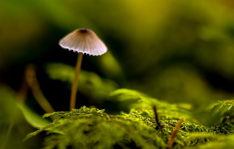 mushroom,forest,green Forest silencephoto preview