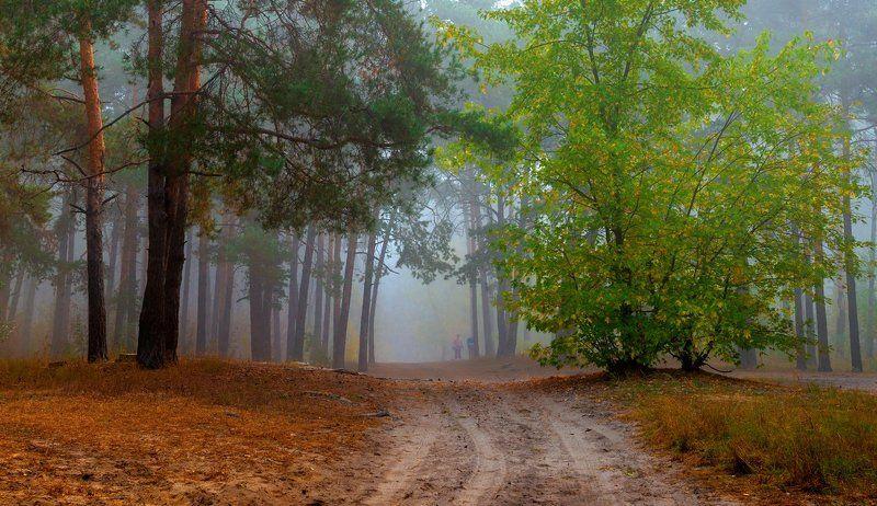 лес, осень, октябрь, тропа, туман Прозрачные осенние туманыphoto preview