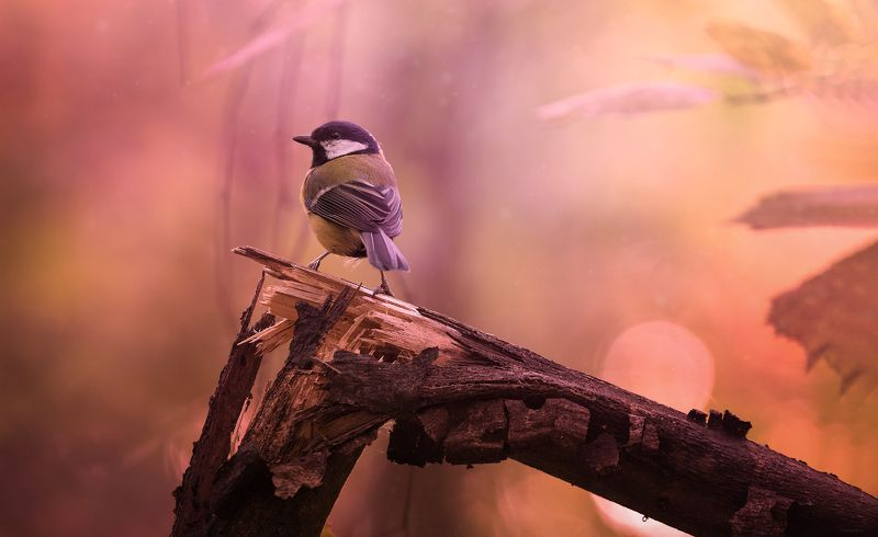 природа, лес, животные, птицы Ожидание чудаphoto preview