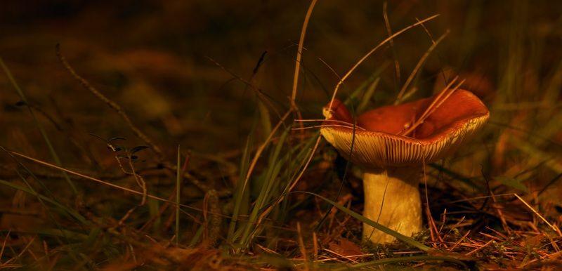 природа,осень,беларусь,лес Картинки из осеннего леса 4.photo preview