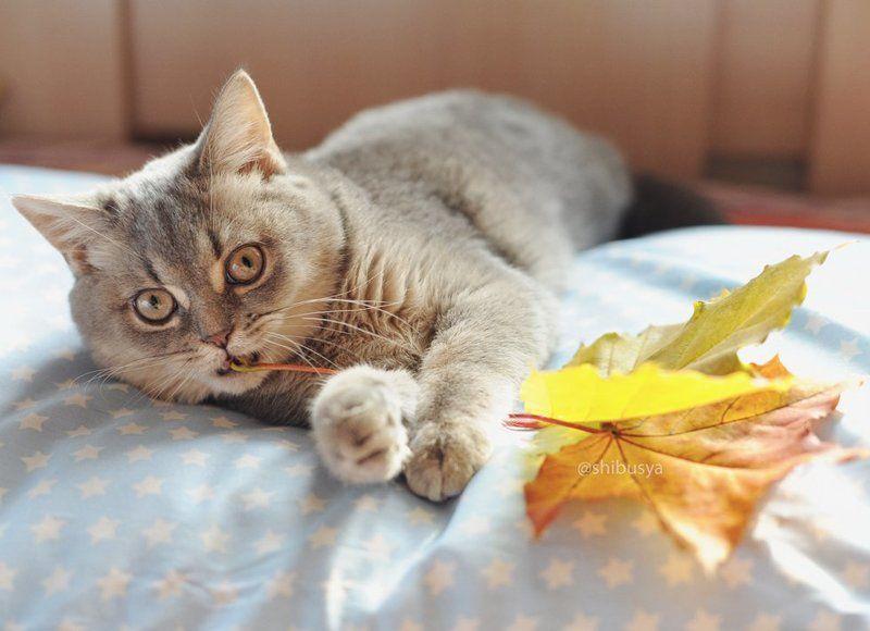 Первая осень котенкаphoto preview