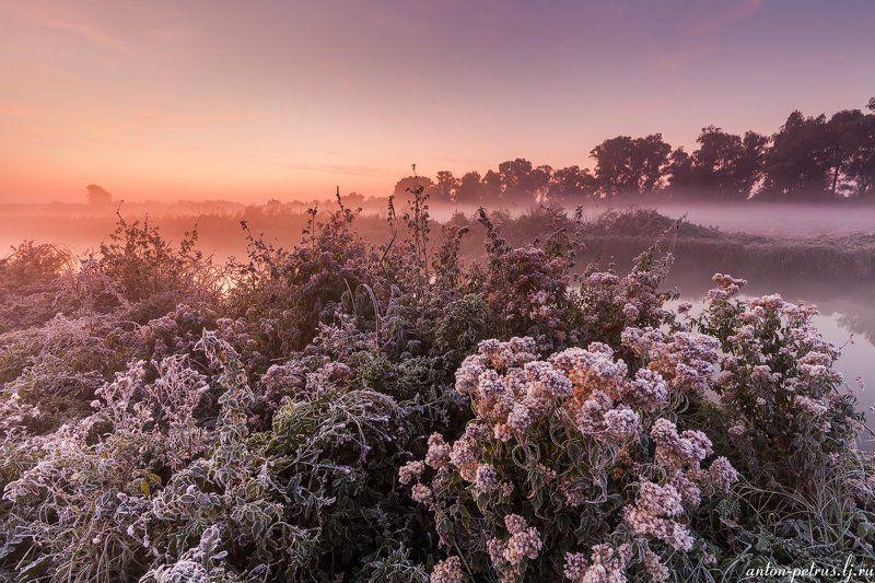 рассвет, туман, река, паутина, иней, осень Осеннний букетphoto preview