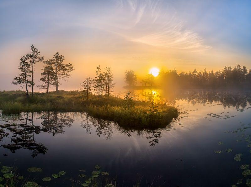 фототур, лето, ленинградская область, деревья, сосна, остров, озеро, рассвет, туман, солнце, отражение, облака. Полуостров в небеphoto preview