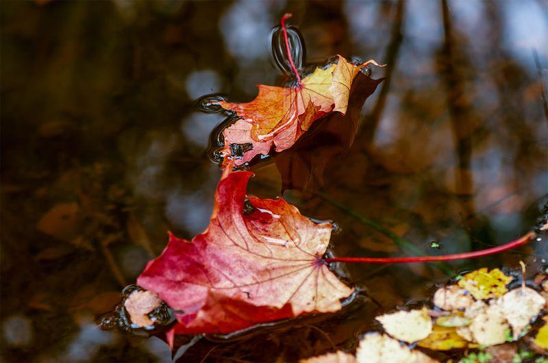 autumn,colors, Autumn flowersphoto preview