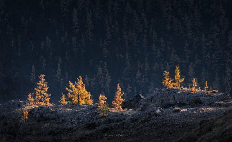 алтай, пейзаж, осень Алтайская осень...photo preview