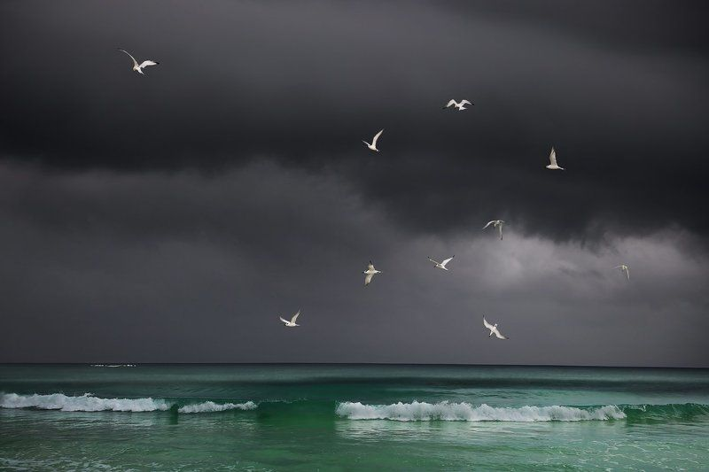 тучи, карибское море, чайки, птицы, море, вода, ураган, стая, мексика Перед ураганом на Карибахphoto preview