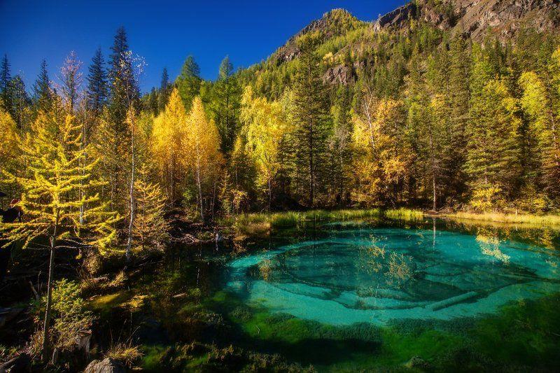 алтай, горы, осень, гейзеровоеозеро Алтайская открыткаphoto preview
