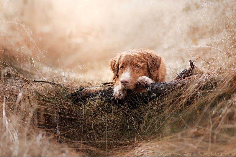 собака, природа, портрет, дождь После дождя...photo preview