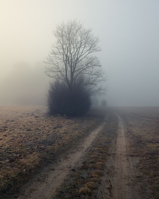 foggyphoto preview