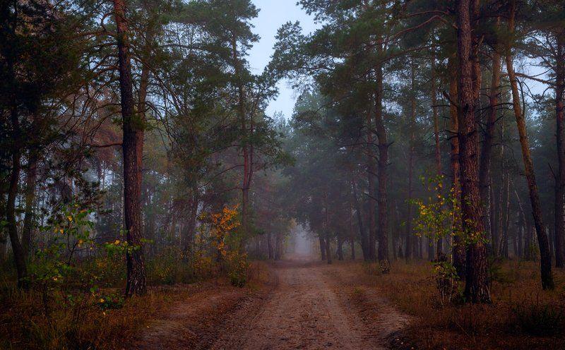 лес, осень, октябрь, тропа, туман Mysterious forestphoto preview