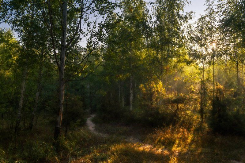 лес, утро, рассвет, осень, сентябрь, туман Рассветный миг так солнечен и сладокphoto preview