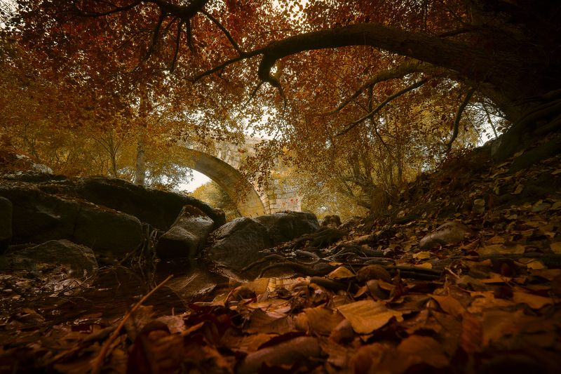 autumn, fall, brown, orange, leaves, reflections, colors Autumn scenephoto preview