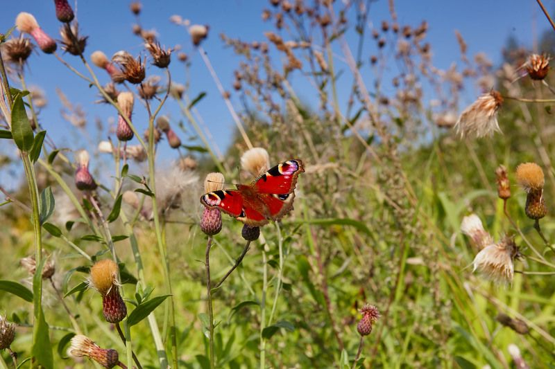 Полёт бабочки. Бабье лето. Клязьма. Москваphoto preview