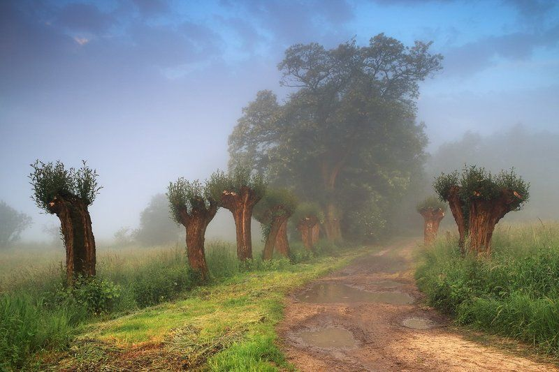 morning, mood, fog, trees, road, summer, Welcome to the junglephoto preview