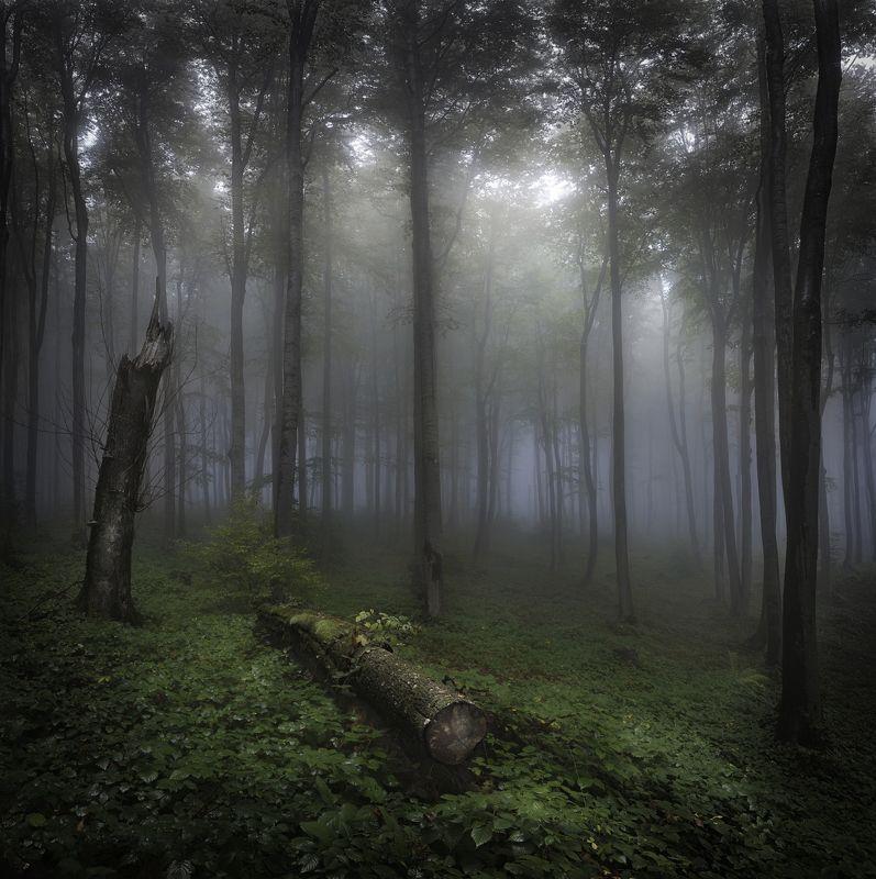 лес, туман, волшебство, сказка, Волшебный лес.photo preview