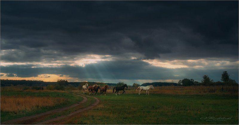 Все ищут подкову на счастье, только не конь...photo preview