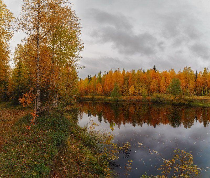 печора,коми,север,осень,золотая Осень севераphoto preview
