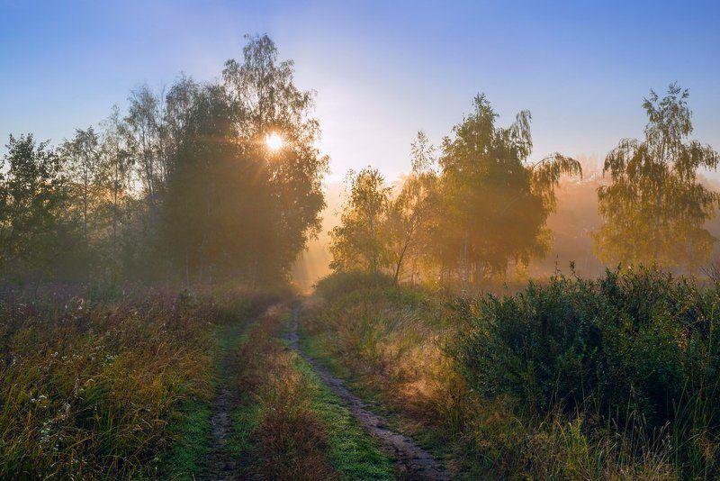 луг, лето, рассвет, туман, солнце, травы, дорога Последнее тёплое утроphoto preview